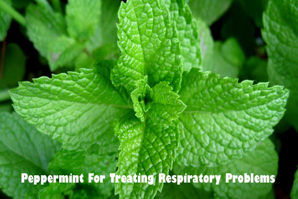 Peppermint for respiratory problems