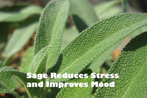 Reduces Stress with Sage