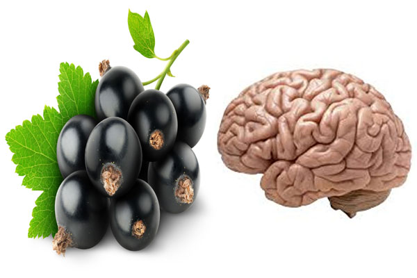 enhancing the functioning of the brain