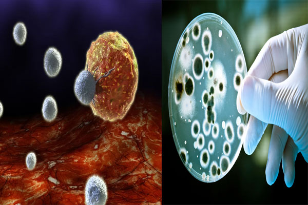 Immune system fight germs