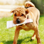8 Reasons Why You Should Get A Dog Or A Cat