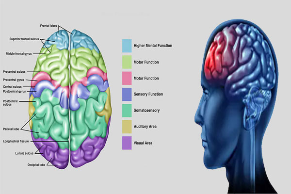 Specific brain functions